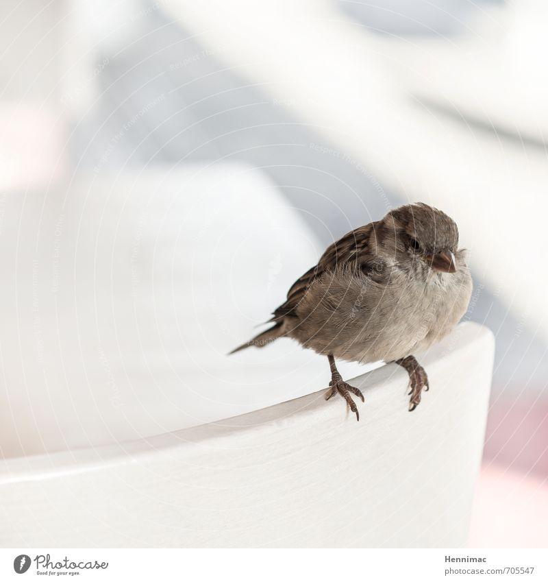 Brötchenkrümel-Wartestellung. Natur schön Einsamkeit Tier grau klein natürlich braun Vogel Zufriedenheit sitzen Wildtier warten niedlich weich rund