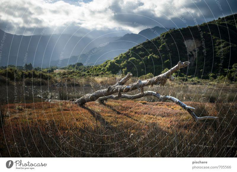 Astrein Natur Landschaft Himmel Wolken Sonnenlicht Baum Gras Sträucher Wald Hügel Neuseeland Abel Tasman National Park Farbfoto Außenaufnahme Tag
