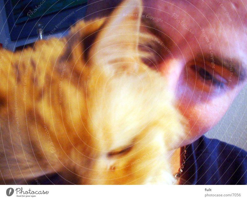 Kater Tier Haare & Frisuren Haustier Katze Hauskatze