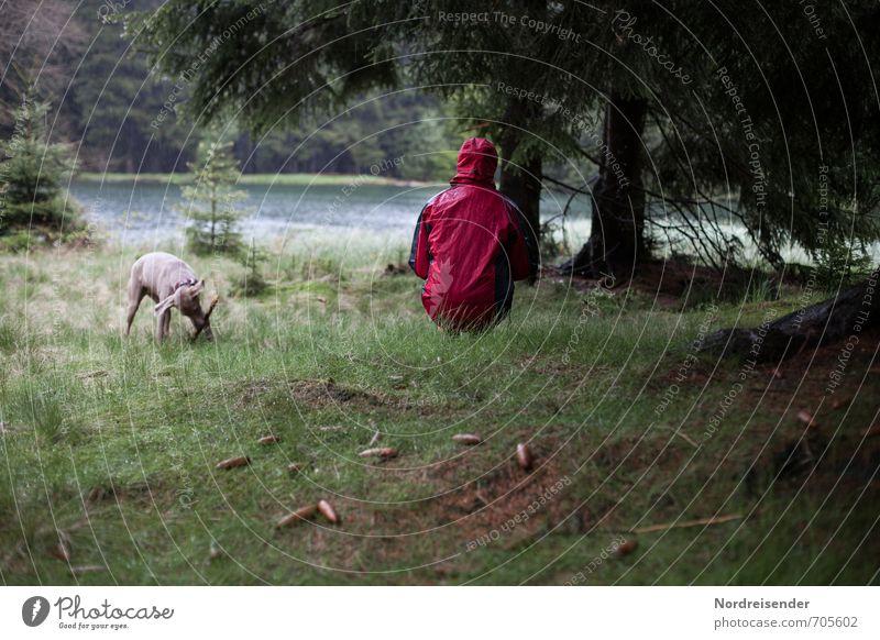 Regenschauer Lifestyle harmonisch Erholung ruhig Meditation Ausflug wandern Mensch Frau Erwachsene 1 Natur Wasser schlechtes Wetter Baum Wiese Wald See
