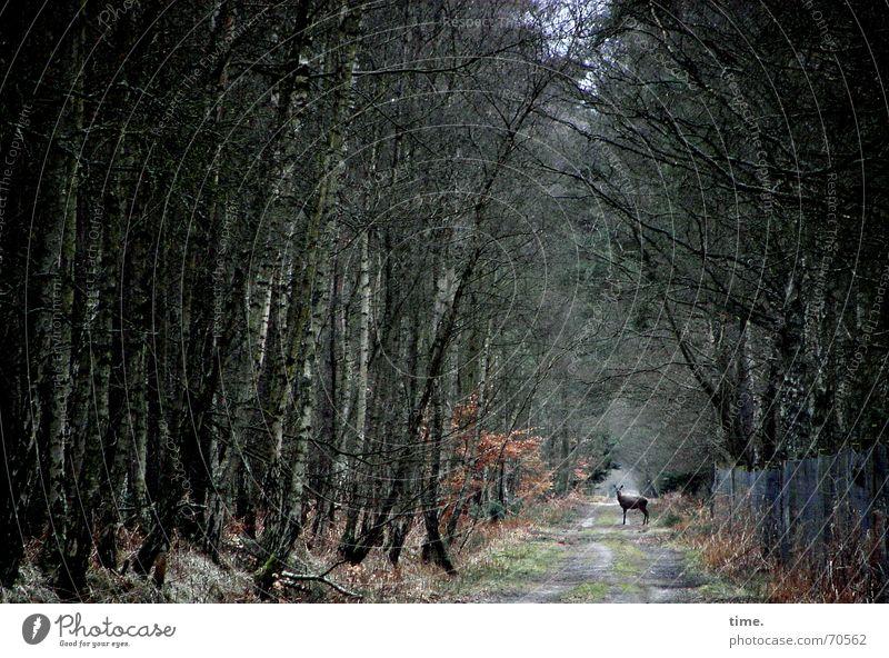 Hier wohne ICH Außenaufnahme Dämmerung Wohnung Tier Baum Wald Wildtier Wachsamkeit Reh Rarität Zaun Unterholz aha Heimat Wildwechsel durch diese hohle gasse...