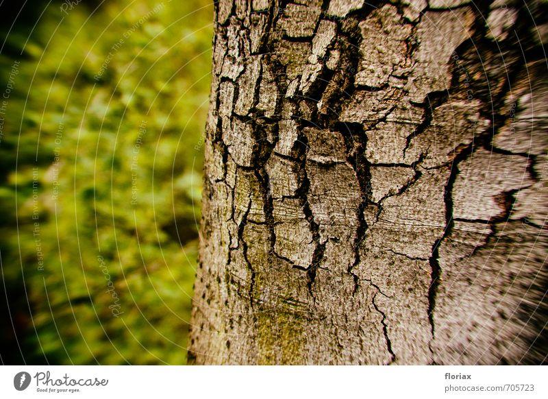 alter stamm Umwelt Natur Pflanze Klima Klimawandel Wetter Baum Park natürlich stark braun grau grün Kraft Senior ästhetisch Umweltverschmutzung Umweltschutz