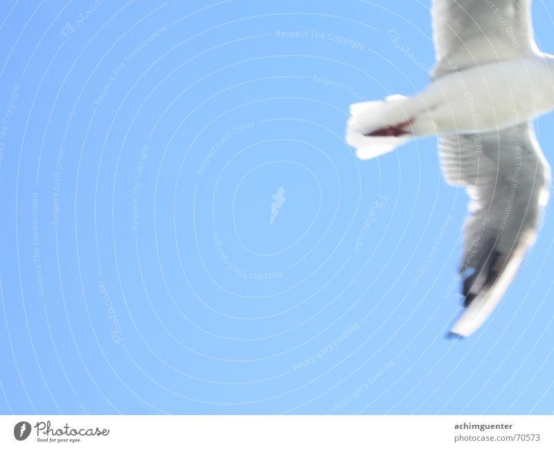Fly away Himmel weiß blau Freiheit träumen Vogel fliegen Feder Abschied himmelblau