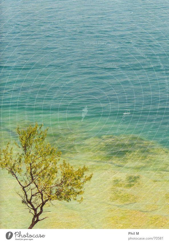 Sirmione Italien Gardasee rein See türkis Meer Küste Felsen steinig Baum grün Laubbaum Erholung Ferien & Urlaub & Reisen ruhig Klarheit Wasser lindgrün Freiheit