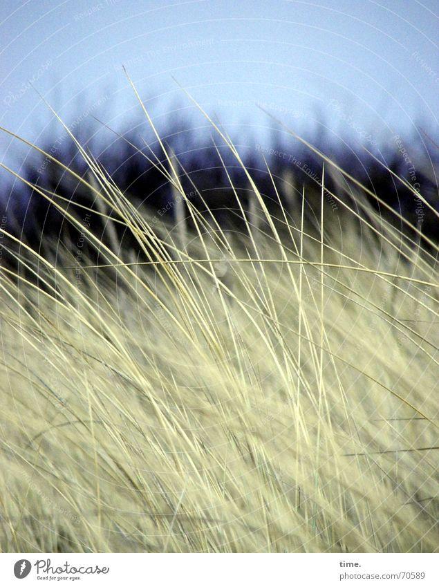 Ostsee mon amour schön Strand Umwelt Natur Gras Wiese Küste Bewegung Ahrenshoop Naturphänomene Wildnis Lee norddeutsch Naturgesetz Licht Schatten Düne natürlich