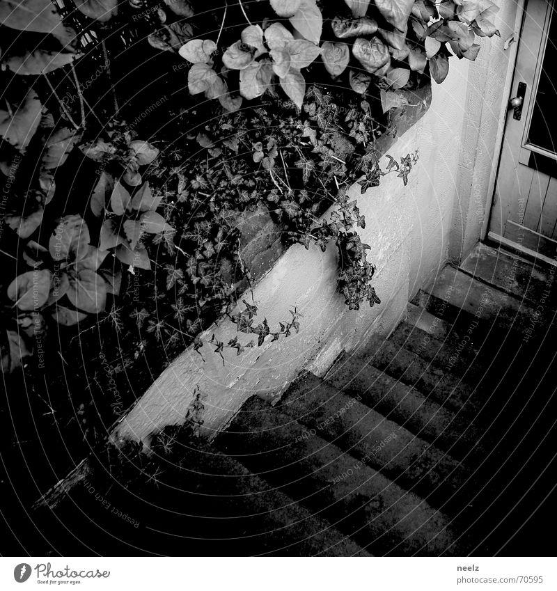 komm rein... dunkel Tür Treppe Eingang Keller anlehnen