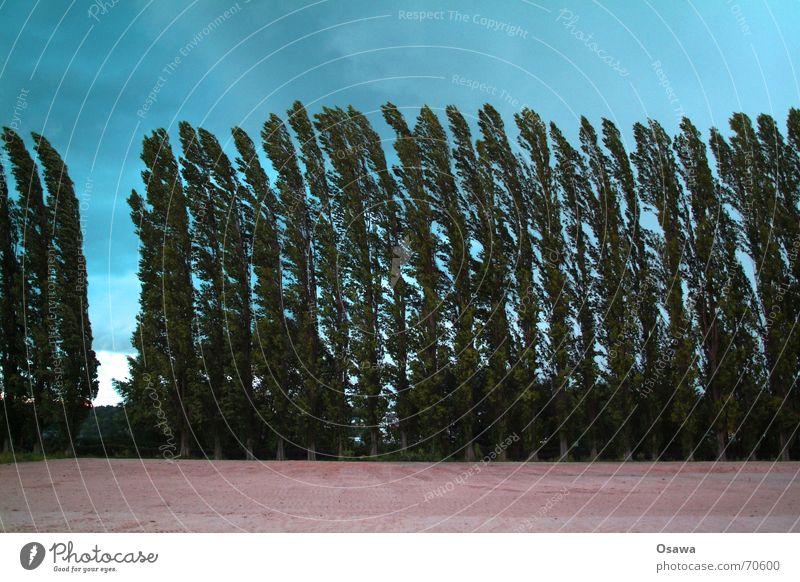 brise von rechts durch die lücke Baum Allee Pappeln Wolken Orgelpfeife leer Schneise Sturm Unwetterwarnung Biegung gekrümmt pappelallee Himmel Sand Reihe Lücke