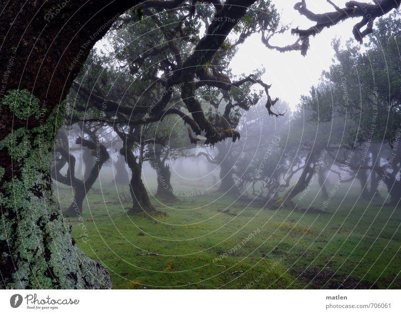 Hexentanzplatz Landschaft Pflanze Wassertropfen Wetter schlechtes Wetter Nebel Regen Baum Gras Moos Wiese Wald Hügel braun grau grün Flechten Farbfoto