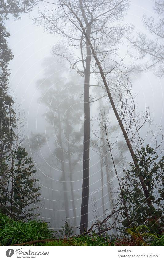 support Natur Landschaft Pflanze Frühling Nebel Baum Wald braun grau grün anlehnungsbedürftig Farbfoto Gedeckte Farben Außenaufnahme Menschenleer Tag