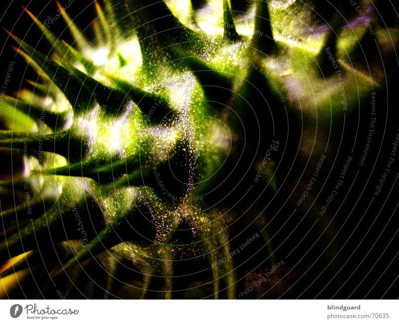 Alien In The Garden gefährlich piecken stechen unheimlich Gift Nachtschattengewächse Bedecktsamer Rauschmittel Heilpflanzen Notarzt außerirdisch Ungeheuer spike
