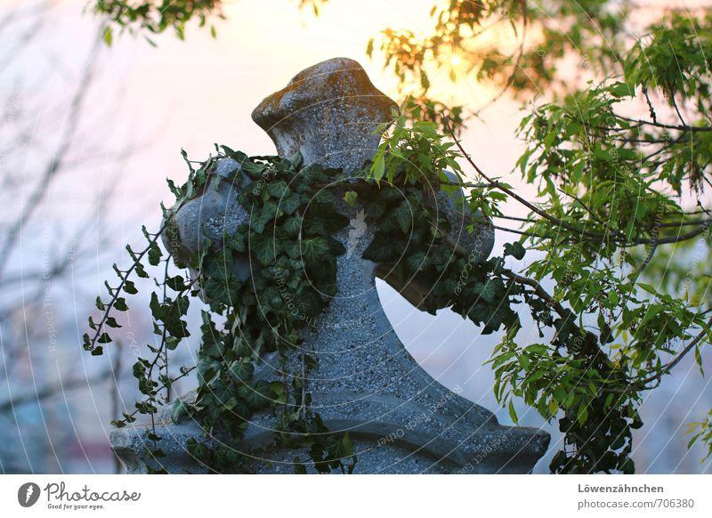 Beauty Of The Cross Pflanze Baum Efeu Stein Kreuz blau gelb grün Gefühle Stimmung Wahrheit Hoffnung Glaube Trauer Tod Schmerz Sehnsucht Einsamkeit Ewigkeit