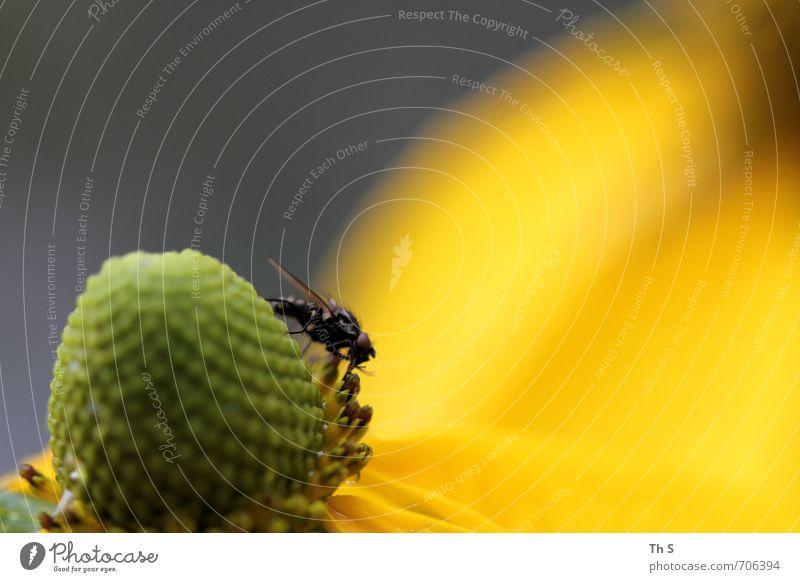 Fliege Natur schön grün Pflanze Sommer Tier schwarz gelb Frühling Blüte natürlich elegant ästhetisch Blühend Lebensfreude
