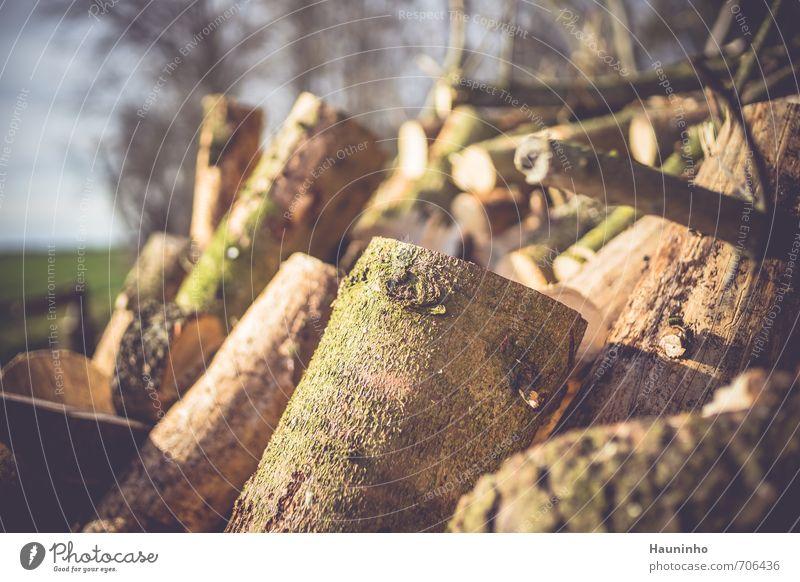 neues Brennholz Natur schön grün Farbe Baum Erholung Landschaft Wald Umwelt Wärme Frühling Holz natürlich braun Arbeit & Erwerbstätigkeit Zufriedenheit