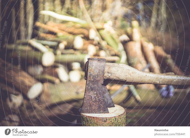 Axt im Wald Natur grün Sonne Baum Einsamkeit Landschaft ruhig Umwelt Frühling grau Holz braun Metall Arbeit & Erwerbstätigkeit authentisch