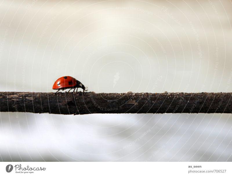 Seinen Weg gehen Fortschritt Zukunft Umwelt Natur Pflanze Tier Luft Klima Garten Fußgänger Wege & Pfade Käfer Marienkäfer 1 Linie Glückskäfer berühren Bewegung