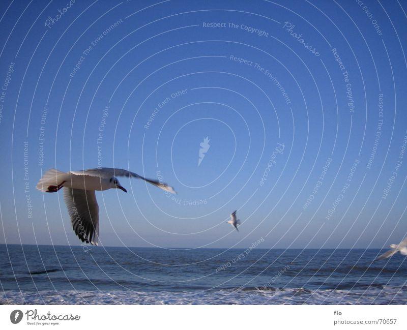 Tiefflug Möwe Vogel Meer Strand Schaum Wellen Wolken Tier Gischt blau Wasser Himmel fliegen Salz