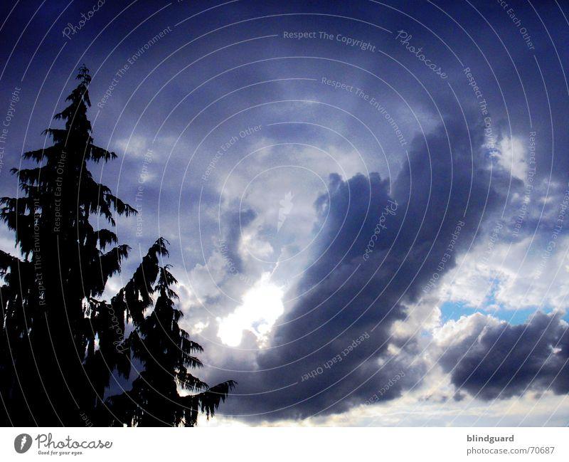 Der Windmann pustet Regenwolken Wolken Silhouette Tanne Baum zyan schlechtes Wetter dunkel Unwetter Gewitter Sommer Himmel Schatten silouette blau Sonne