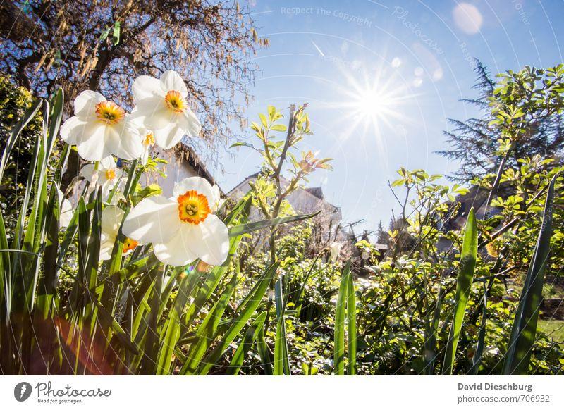 Frühlingswetter harmonisch Erholung ruhig Sommer Sommerurlaub Natur Pflanze Tier Wolkenloser Himmel Schönes Wetter Wärme Baum Blume Gras Sträucher Blatt Blüte