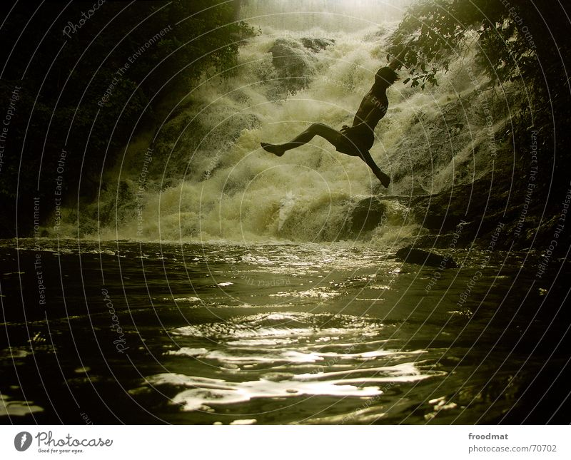 Tarzan Natur Jugendliche Wasser grün Baum Ferien & Urlaub & Reisen Sonne Sommer Freude Wald dunkel Wärme springen Stil Wellen Schwimmen & Baden