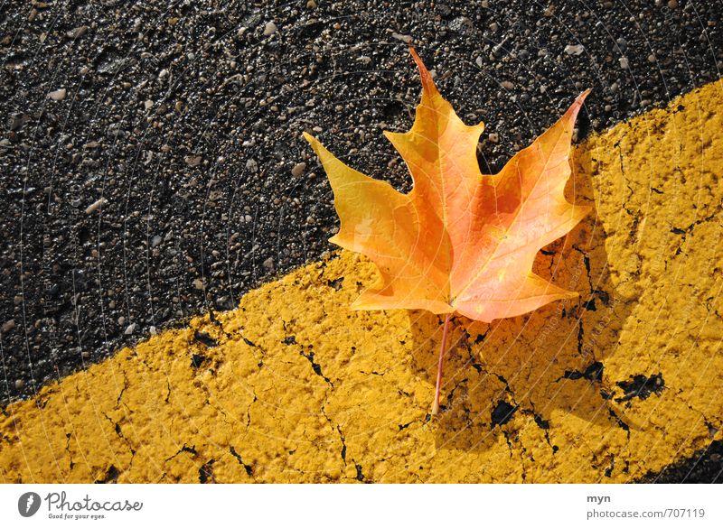 Gut getarnt durch den Herbst Natur alt Pflanze Baum Blatt gelb Umwelt Straße Wiese Herbst grau Park ästhetisch Beton Schönes Wetter Vergänglichkeit