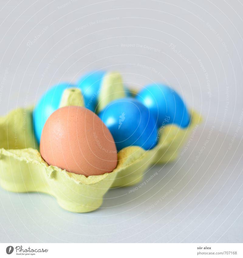 neutral Lebensmittel Ei Ernährung Essen Frühstück Ostern blau braun grau Tradition Osterei Eierkarton Familienfeier Gesunde Ernährung außergewöhnlich normal