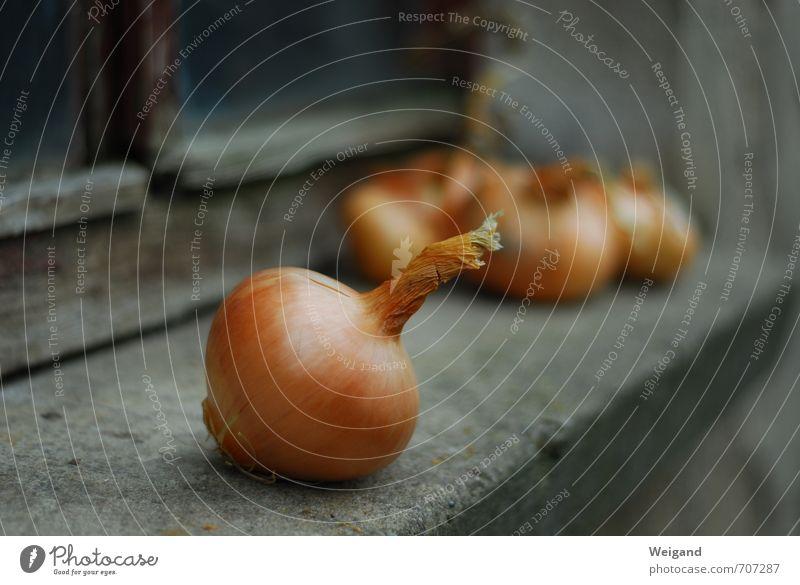 Zwiebelfisch Gesunde Ernährung Herbst Kochen & Garen & Backen Küche Gemüse Ernte Bioprodukte Markt Suppe Landhaus