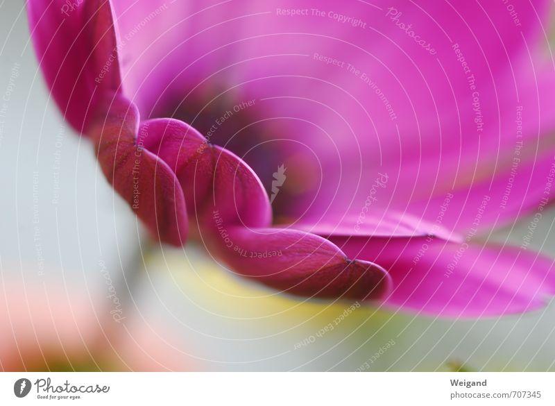 Die Erde ist eine Blume Pflanze Blüte genießen rosa rot Gefühle Stimmung Freude Glück Fröhlichkeit Zufriedenheit Lebensfreude Frühlingsgefühle Vorfreude