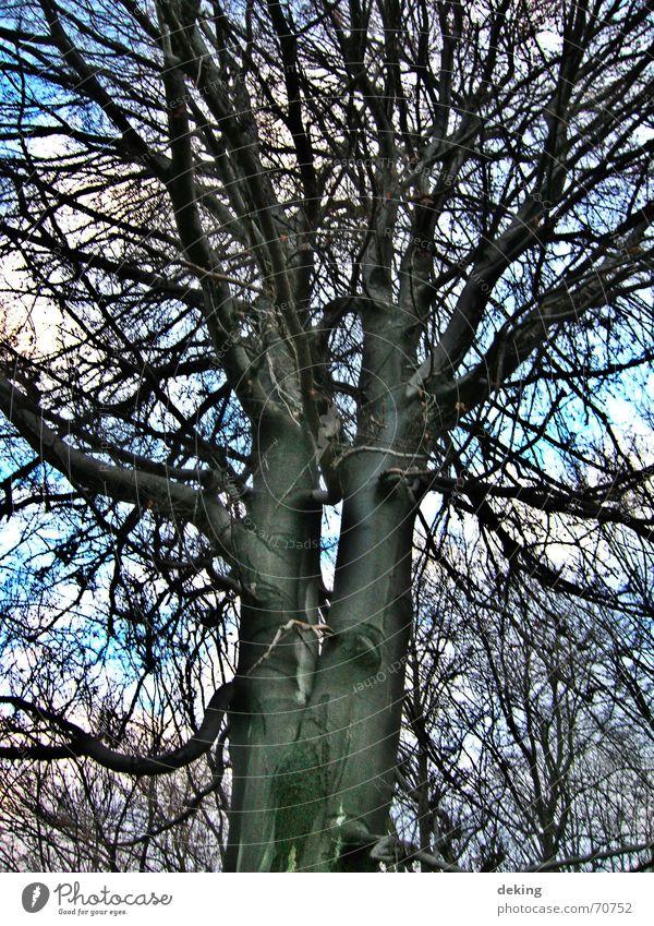 Siamesische Zwillinge Natur Himmel weiß Baum blau schwarz hoch Niveau Netz Ast Baumkrone Zweig