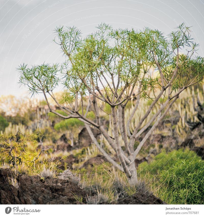 San Andrés / Teneriffa XXXIII Natur Ferien & Urlaub & Reisen grün Pflanze Landschaft Umwelt Berge u. Gebirge braun Felsen Park Wachstum Sträucher wandern