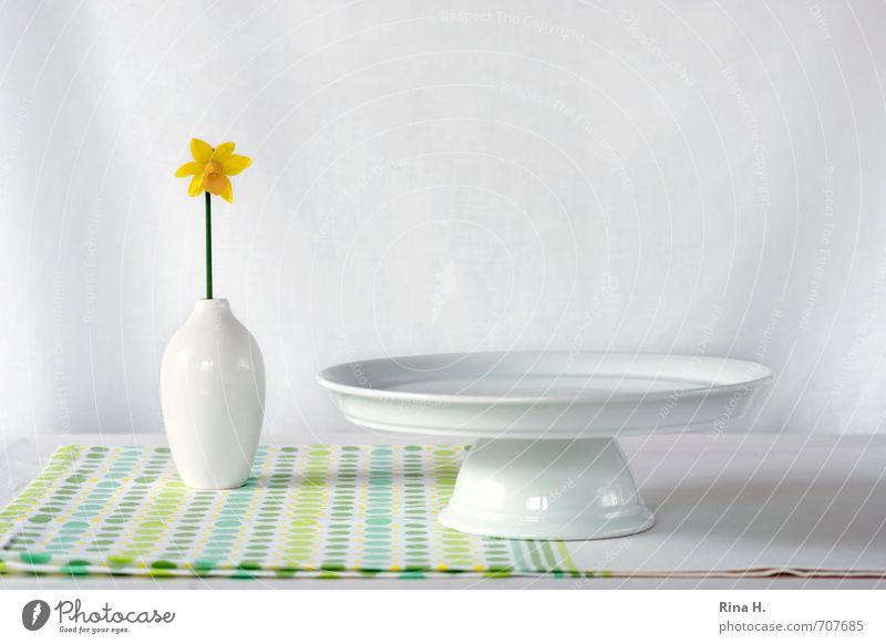 Still mit Narzisse grün weiß Blume gelb hell Häusliches Leben frisch ästhetisch einzeln Blühend ausdruckslos Geschirr Stillleben Teller Tischwäsche Vase