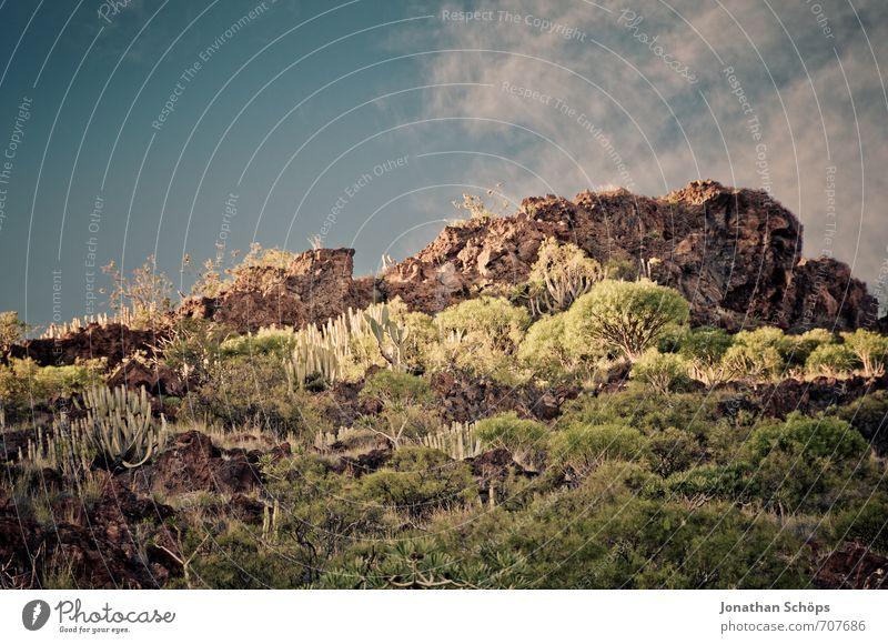 San Andrés / Teneriffa XXXI Umwelt Natur Landschaft Pflanze Sträucher Felsen Berge u. Gebirge Gipfel Insel ästhetisch Wüste Wüstenpflanze Spanien Kanaren Süden