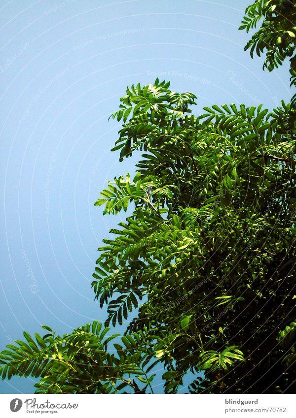 Mein Freund der Baum grün zyan Pflanze blau Ast tree leave blue Leben Natur