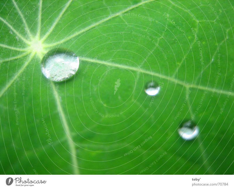 Morgentau Wasser Pflanze Blatt Wassertropfen Seil Gefäße