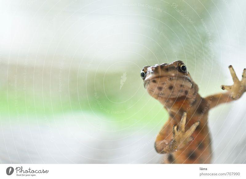 wer bin ich Tier Wildtier Frosch Tiergesicht Molch 1 beobachten berühren außergewöhnlich Neugier niedlich braun grün Entsetzen Stress Nervosität verstört