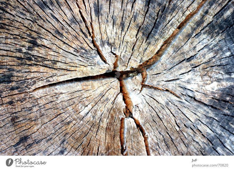 woodboow Natur alt Baum Holz Falte trocken Furche