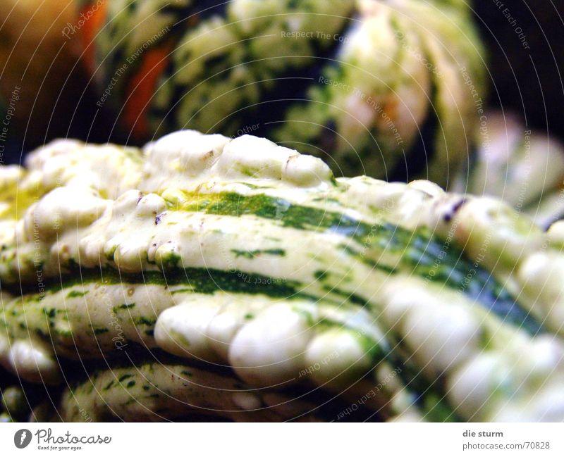 Kürbis Oberfläche Pflanze Naturprodukt hässlich grün weiß handlich Gesundheit Vitamin Ernährung gewachsen genießen Geschmackssinn Feld Herbst Nahaufnahme Farbe