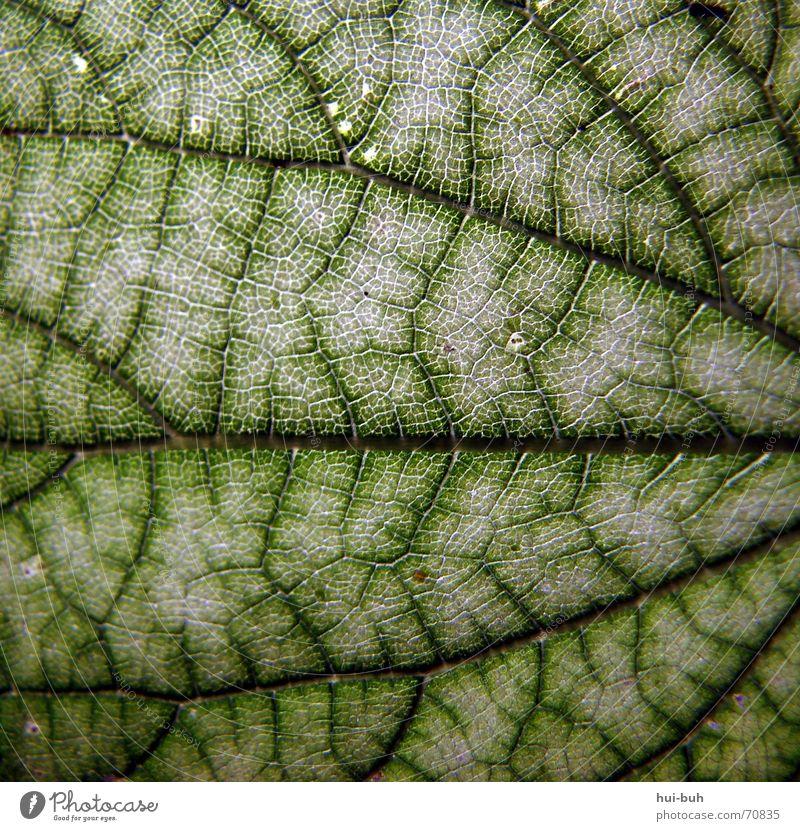 blattstruktur Blatt grün Gefäße Photosynthese Baum Abzweigung Strukturen & Formen Linie Ecke Ausfahrt Punkt zusammenlauf