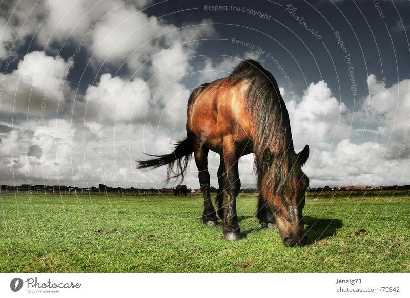 Rasenmäher. Pferd Landkreis Friesland Tier Wiese Weide Wolken Haustier Himmel