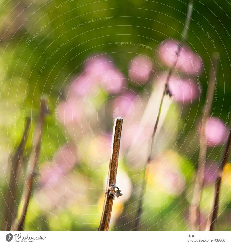 Blümchenbild Blume Natur Garten Ast Schwache Tiefenschärfe Unschärfe Blühend Blüte grün rosa
