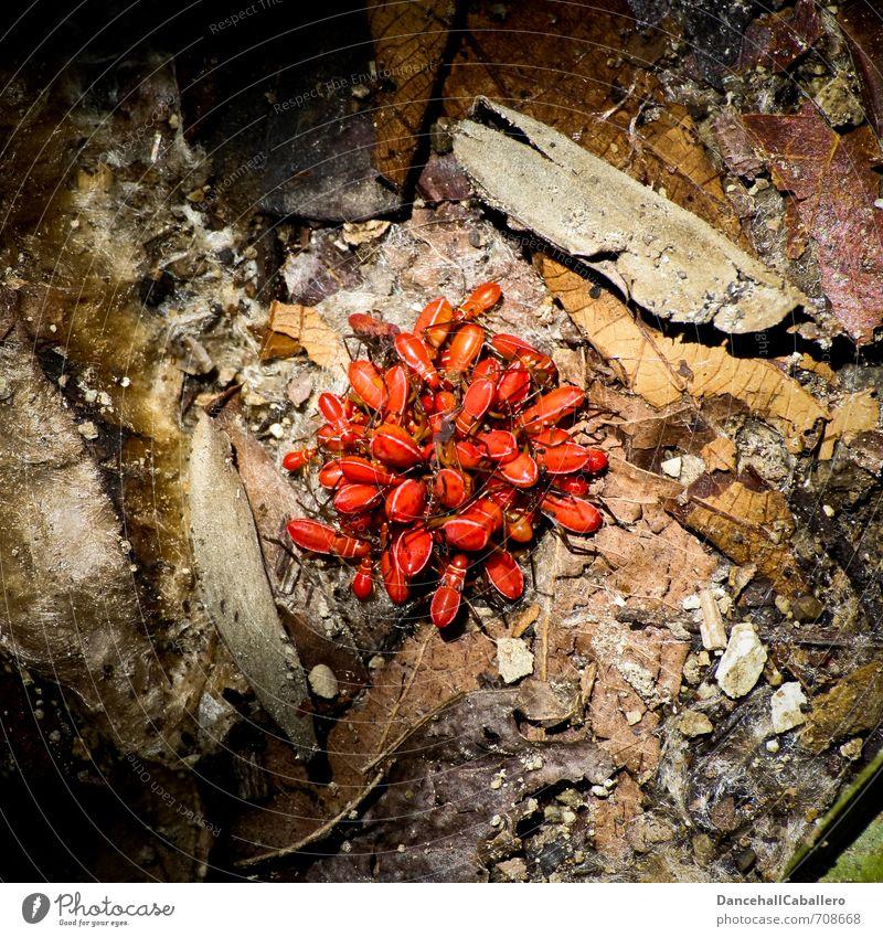 Gruppenkuscheln Natur rot Blatt Tier Wald Essen Zusammensein Erde mehrere Tiergruppe Urwald durcheinander kuschlig Käfer krabbeln Ekel