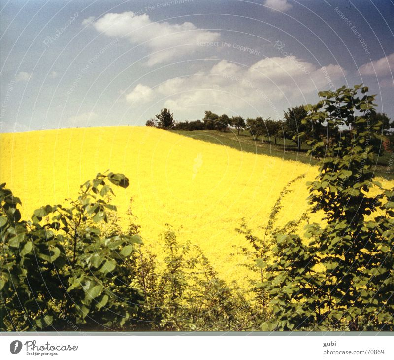 gelbland Natur Himmel Sommer Erholung Glück Landschaft Feld Deutschland