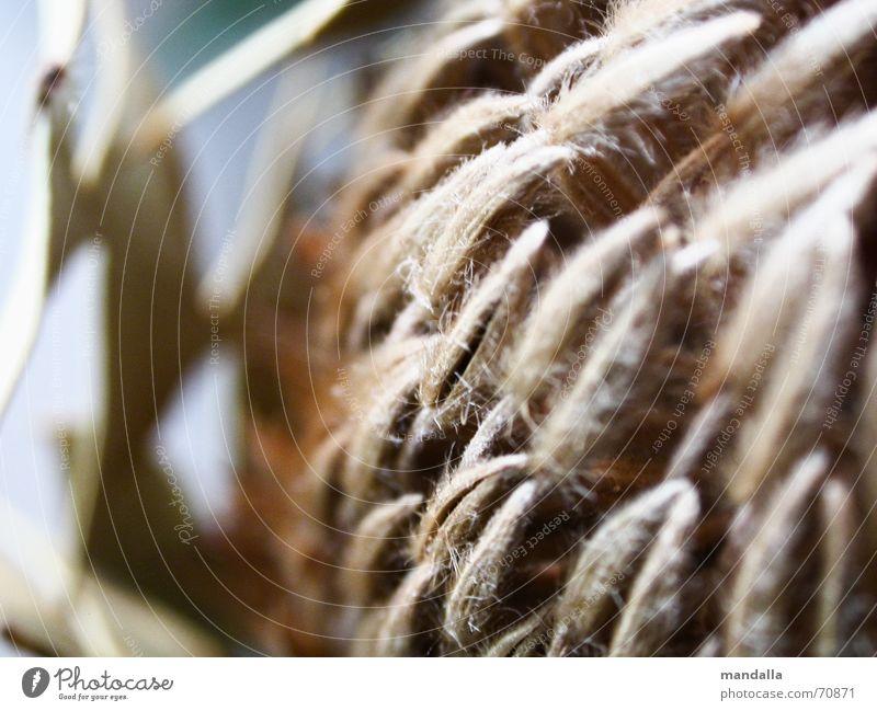 vertrocknet Pflanze braun Dekoration & Verzierung Spitze trocken exotisch