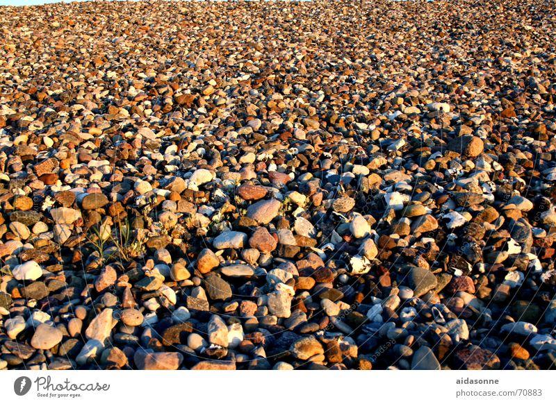 Steine Strand rund Unendlichkeit Ostsee viele Algen Kieselsteine Kieselstrand Steinblock Steinstrand Heiligendamm uneben