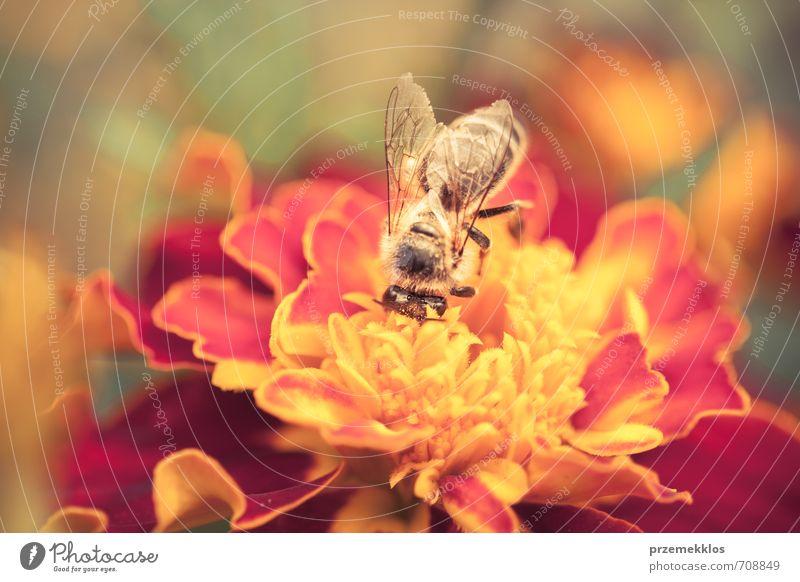 Natur Pflanze Sommer Blume Tier gelb Umwelt Wiese Blüte klein natürlich oben Garten gold wild Wildtier