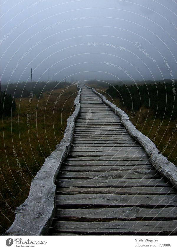 Aus der Ferne komm ich her Himmel grün Ferne Holz Nebel Brücke Sträucher Steg Sumpf Tschechien