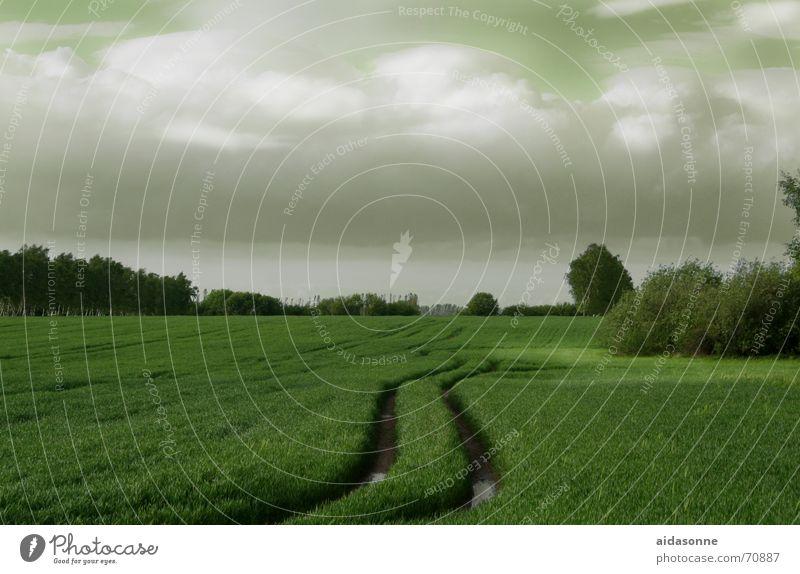 Fruchtbares Land Baum Wald Wiese Feld Ernte Weide Korn Mecklenburg-Vorpommern Landwirtschaft