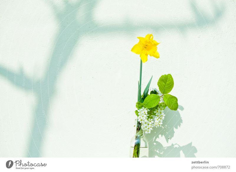 Vase Häusliches Leben Garten Innenarchitektur Dekoration & Verzierung Frühling Klima Wetter Schönes Wetter Baum Blume Blüte Park Mauer Wand Wachstum Freude