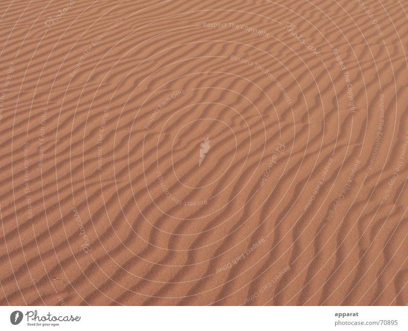 Wellen im Sand rot unfruchtbar trocken Dürre heiß Physik Glut glühend Namibia Einsamkeit Außenaufnahme Wüste leer Ferne Wärme Kalahari Sahara