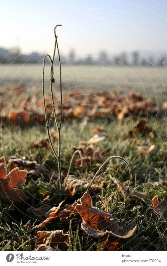 in den Himmel ragend ... Versuch November Sonntag Gummistiefel Regenhose
