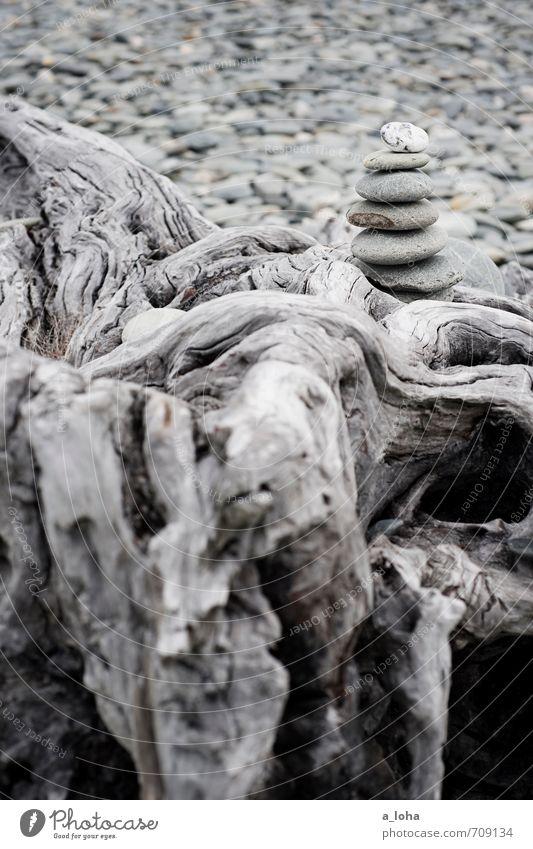 We Will Rock It Natur Ferien & Urlaub & Reisen Meer Strand Umwelt Küste grau Holz Stein oben Design Urelemente Zusammenhalt Verfall Fernweh stagnierend